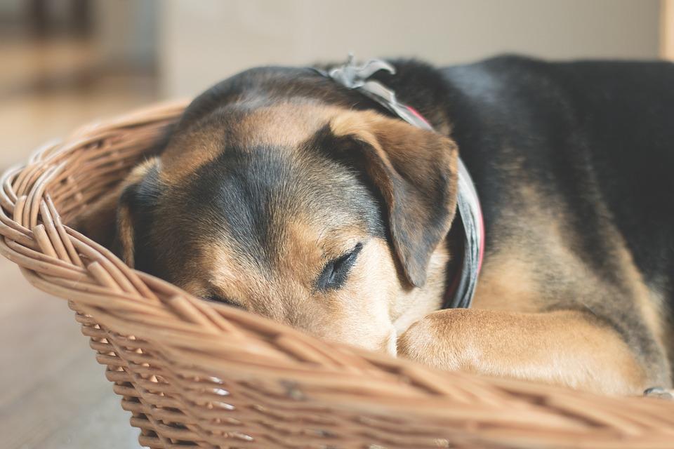 Miért fontos a kutyafekhely?